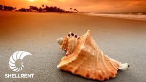 beaut-shell2